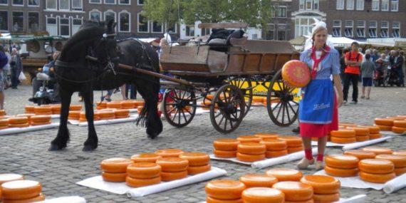 gouda intro 570x285 - Gouda jeune Hollandais (250gr)